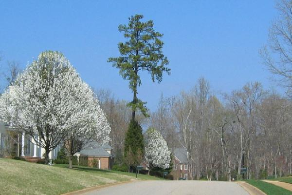Blossoms on Yorkshire Drive Loop.jpg